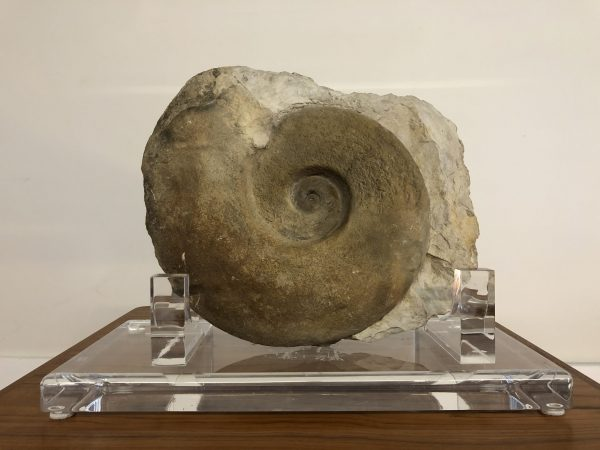 Ammonite Stone Fossil on Acrylic Stand – $1095